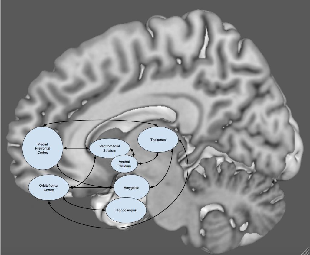 Limbic cortical striatal pallidal thalamic circuit  1024x844 - Angst