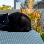 irrational beliefs superstition black cat