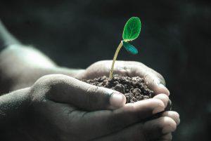 Vertrauen Wachsen Pflanze Hand 300x201 - The 7 pillars of mindfulness - #4 Trust