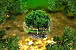 acceptance living earth simulator 300x200 - The 7 pillars of mindfulness - #6 Acceptance