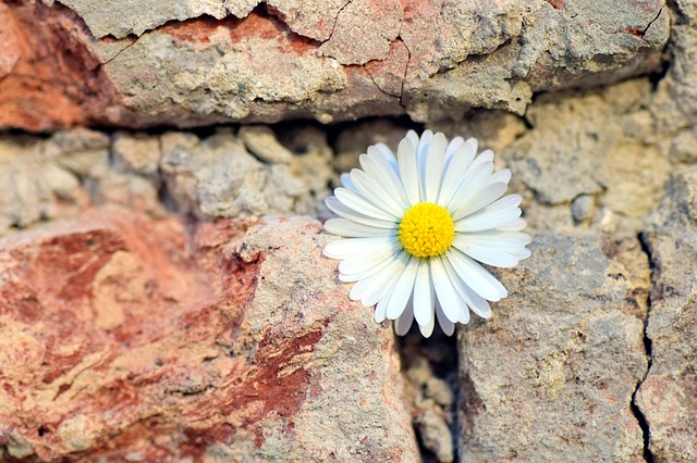 flower 1 - Psychotherapie