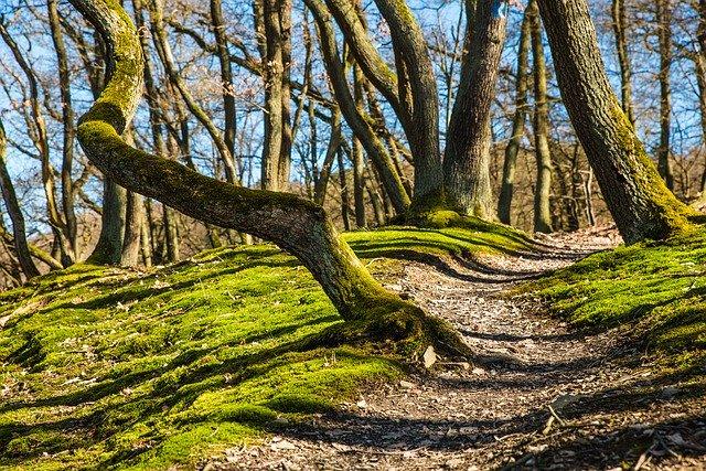 forest - Öffnungszeiten