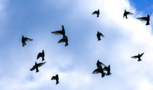 letting go birds of sorrow 300x177 - Die 7 Grundsätze der Achtsamkeit - #7 Loslassen