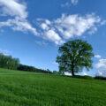 breathing freedom tree meadow sky